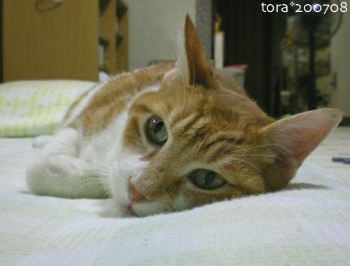 tora07-08-42.jpg
