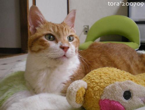 tora07-09-25.jpg