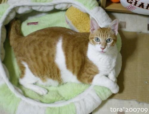 tora07-09-4.jpg