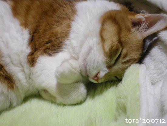 tora07-12-108.jpg