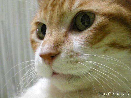 tora07-12-113.jpg