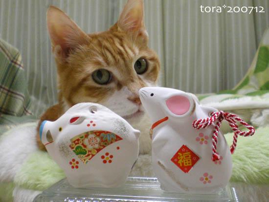 tora07-12-124_20071231225059.jpg