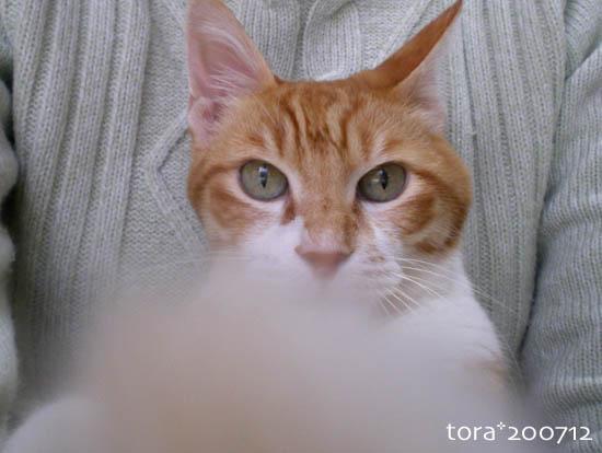 tora07-12-37.jpg