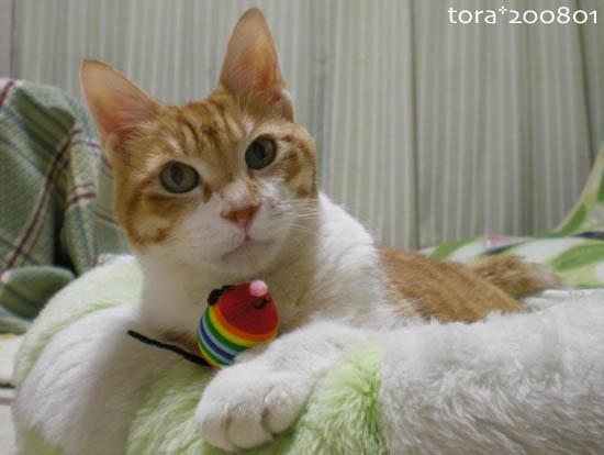 tora08-01-03.jpg