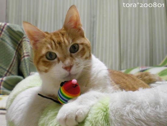 tora08-01-04.jpg