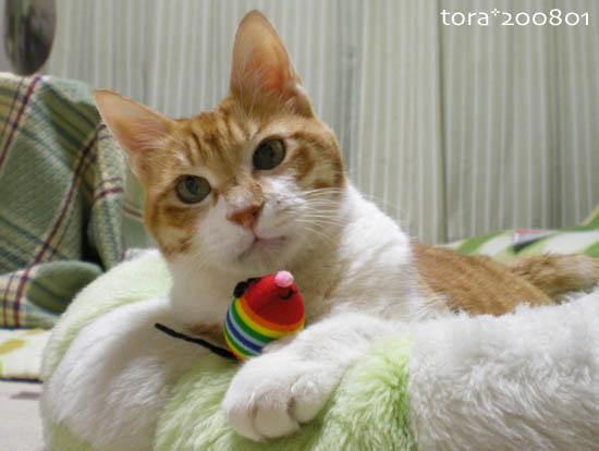 tora08-01-05.jpg