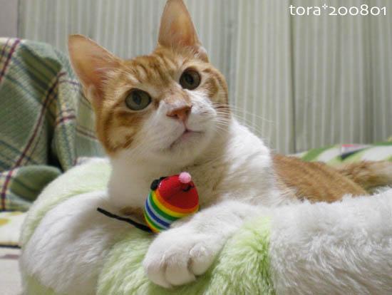 tora08-01-06.jpg