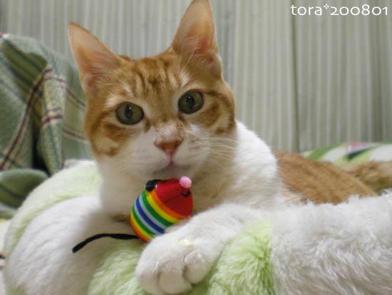tora08-01-09.jpg