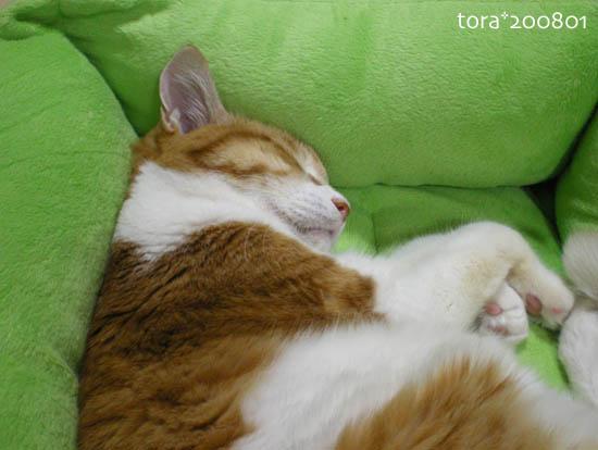 tora08-01-122.jpg