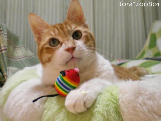 tora08-01-14.jpg