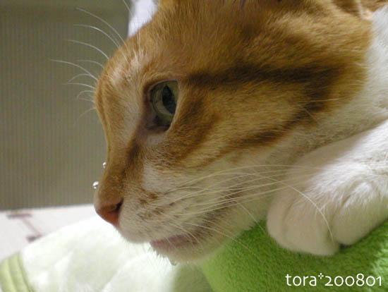 tora08-01-151.jpg