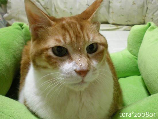 tora08-01-155.jpg