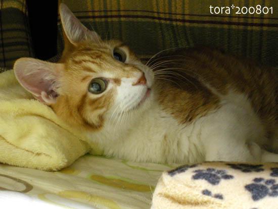 tora08-01-161.jpg