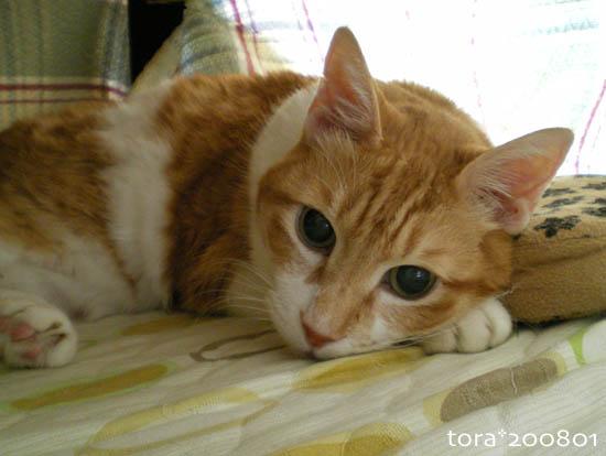 tora08-01-19.jpg