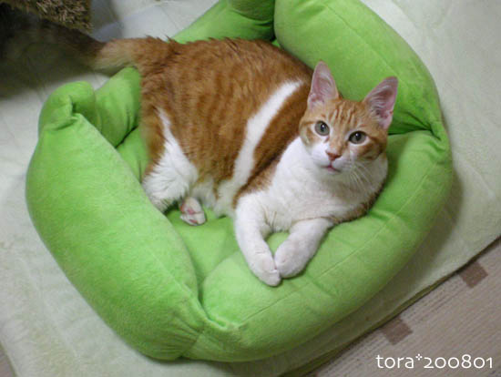 tora08-01-201.jpg