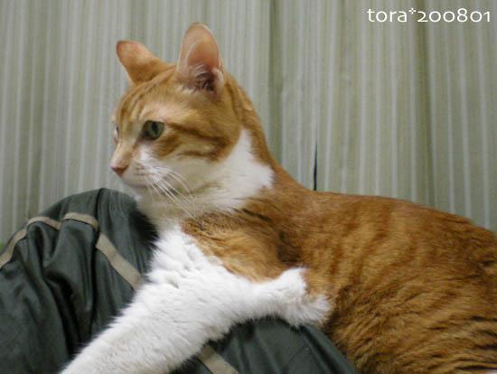 tora08-01-56.jpg