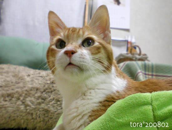 tora08-02-133.jpg