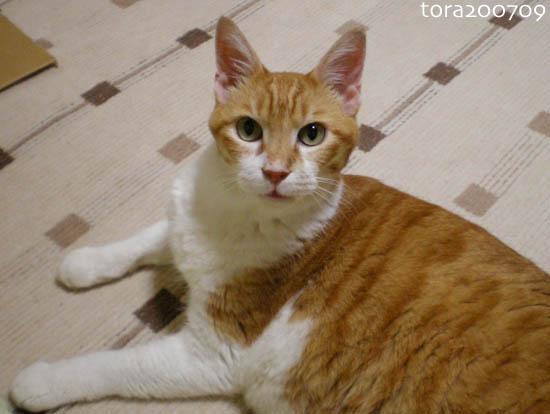 tora19-09-2.jpg