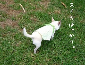 kyamiwanpi.jpg