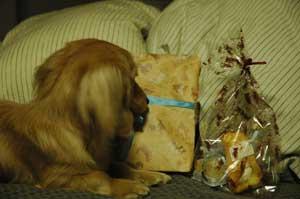 テラとプレゼント2