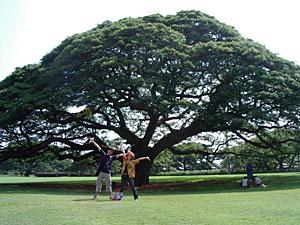 この木なんの木 モアナルアガーデン