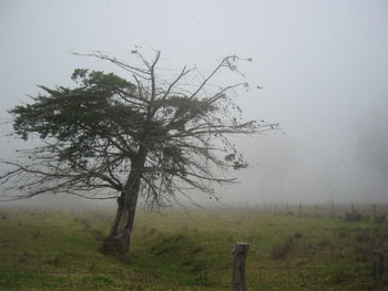マウナケア山頂 星空観測ツアーレポ パーカー牧場