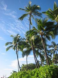ハワイにサイナラ