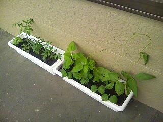 ことり菜園