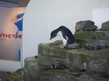 優花とペンギン