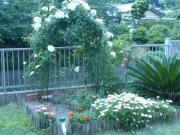 090523薔薇園