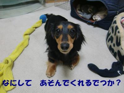 CIMG2021_convert_20090424215610[1]