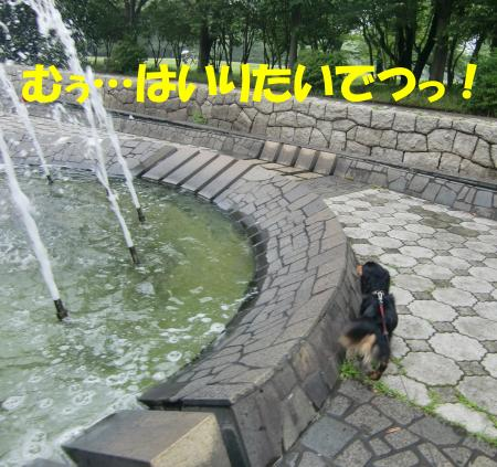 CIMG2488_convert_20090531171800[1]
