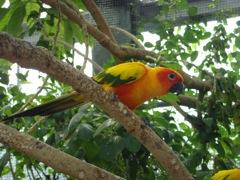 掛川花鳥園インコ