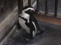 掛川花鳥園ペンギン