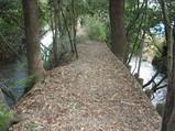 野々宮神社への山道
