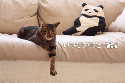 パンダとサラサ