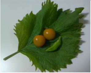 大葉とトマトとオクラ