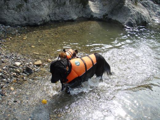 川遊び5ランとミル