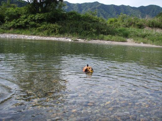 川遊び5みる