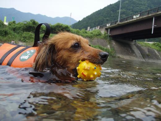 川遊び10みる