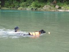 川遊び13 ランと泳ぐ