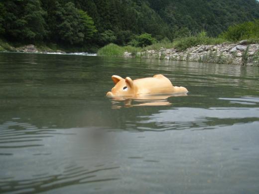 川遊び13 ぶーちゃん