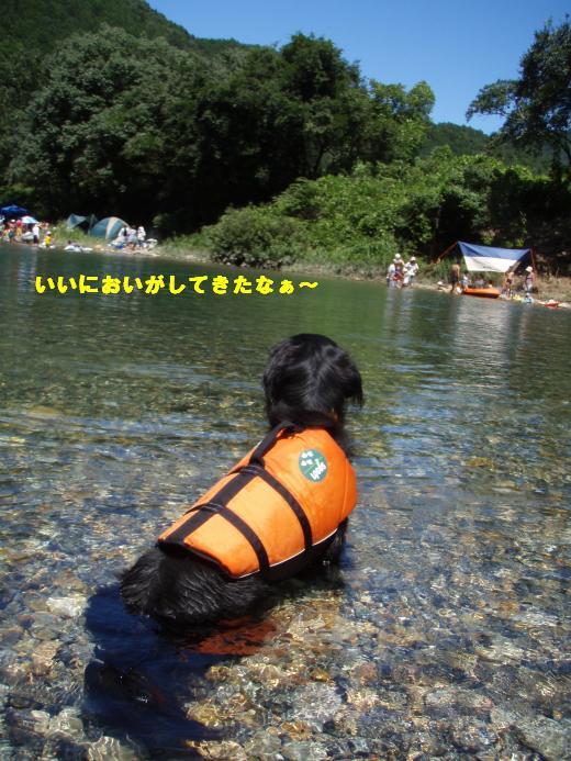 川遊び18 いいにおい