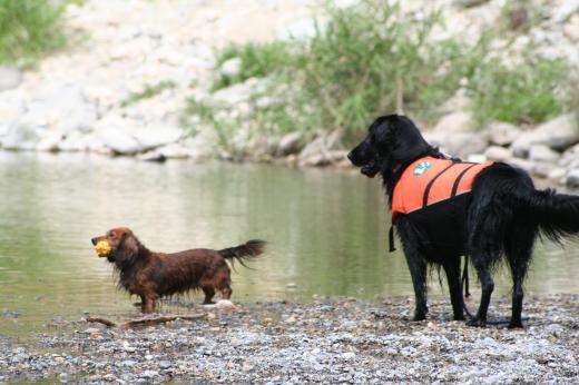 川遊び26 ミルとラン