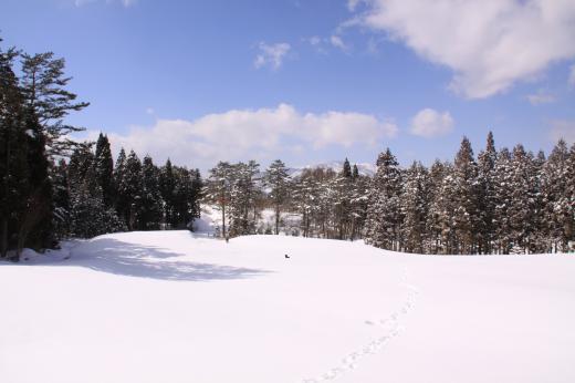 冬・ゴルフ場