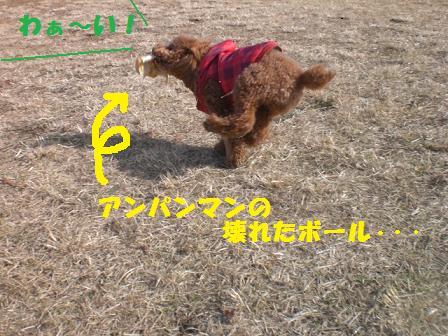 CIMG2734.jpg