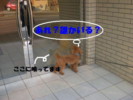 CIMG3095.jpg