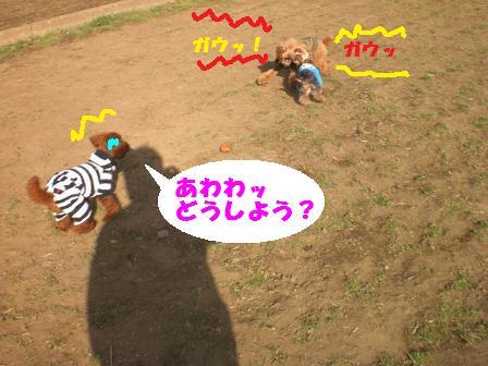 CIMG3572.jpg