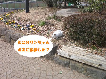 CIMG3768.jpg