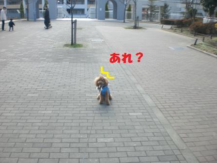 CIMGa3605.jpg